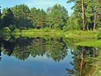 Уведомление о проведении общественных (публичных) слушаний  по вопросу создания лесопаркового зеленого пояса г. Пензы.